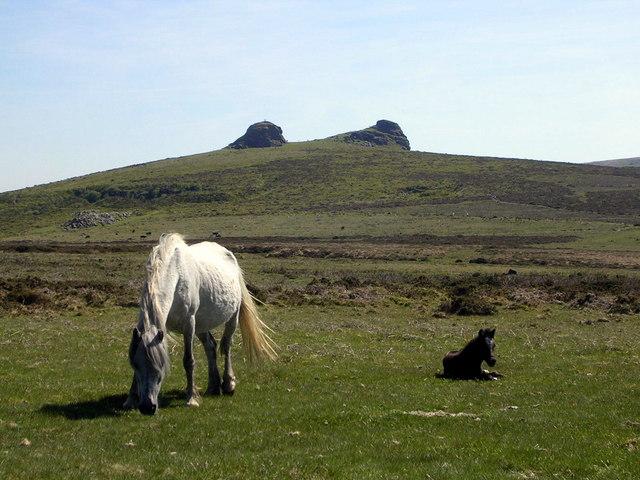 Ponies and Haytor Rocks