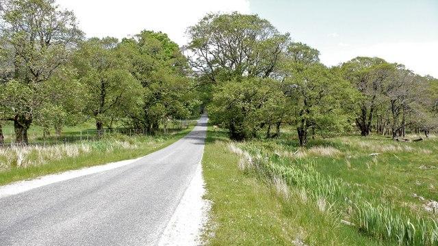Woodland near Goirtean a' Chladaich