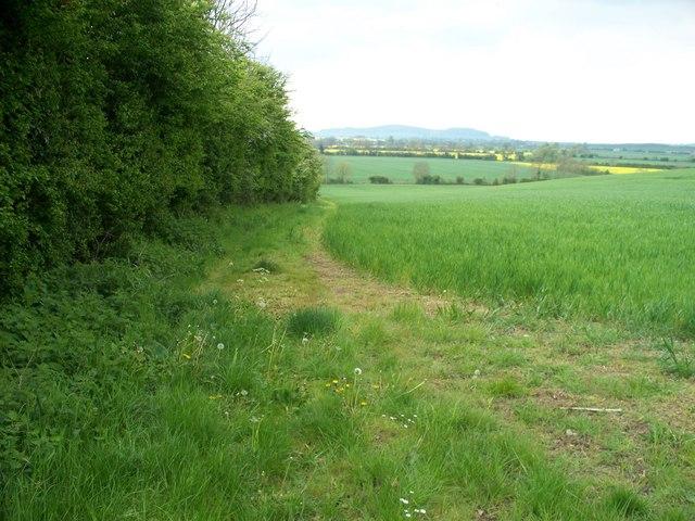 Along the field edge