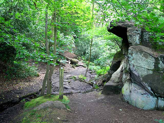 Rocky path in Waterfall Wood