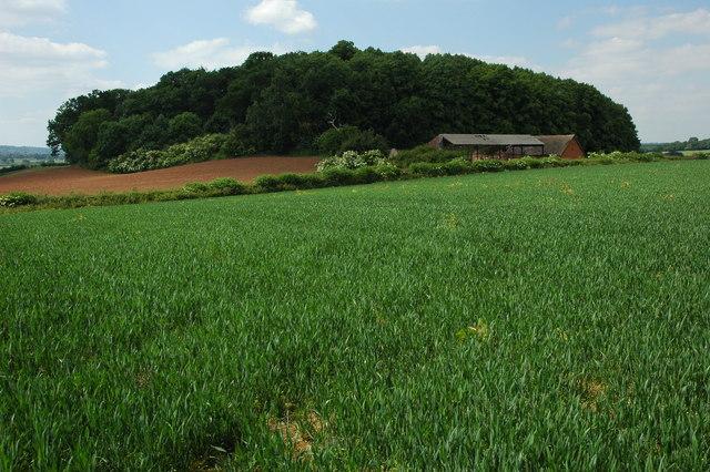 Windmill Hill Barn