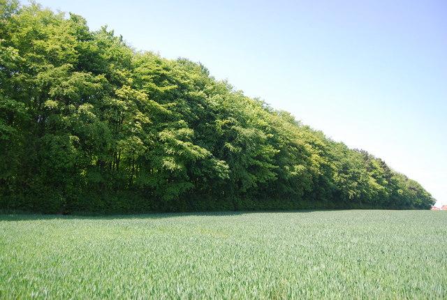 Maidlands Plantation