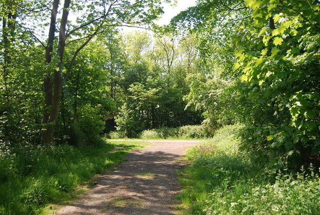 Footpath through Maidlands Plantation