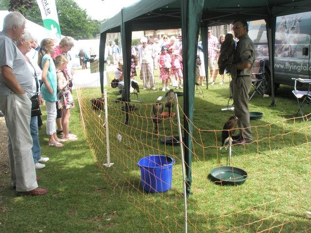 2010 Stansted House Garden Show - birds of prey