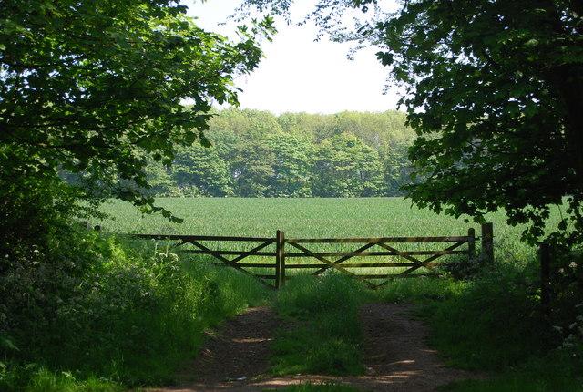 Wheat fields beyond the gates