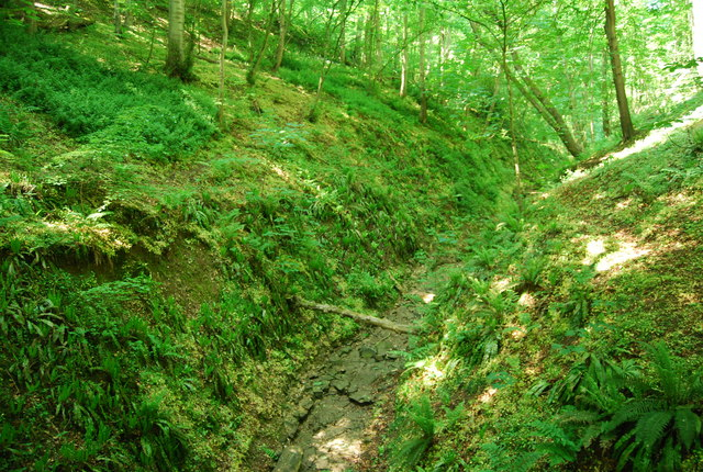Dry stream bed, Dyke Wood