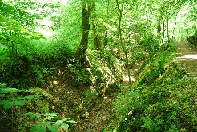 Stream bed, Dyke Wood