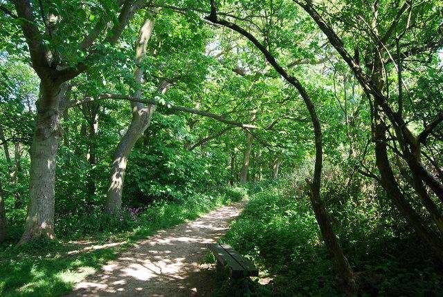 Footpath, Dyke Wood