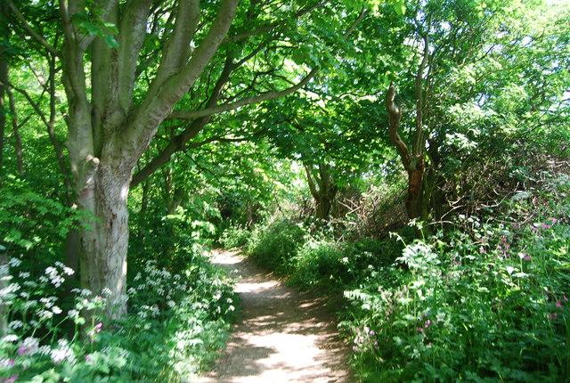 Footpath in Dyke Wood
