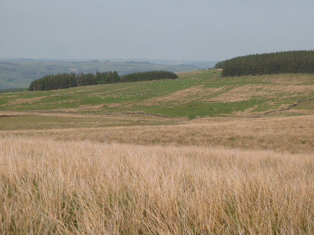 Plantations on Ridley Common (2)