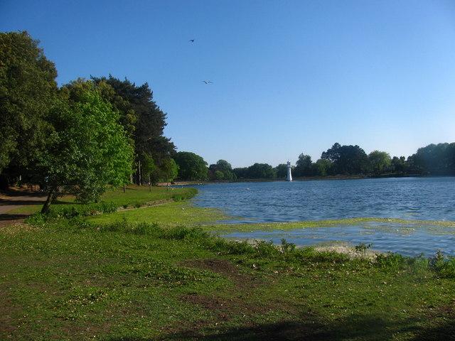 Blue Roath Park Lake