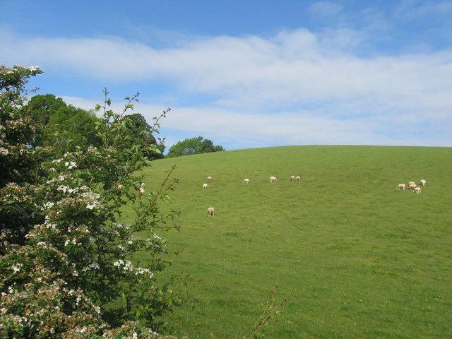 Grazing land near Langlee