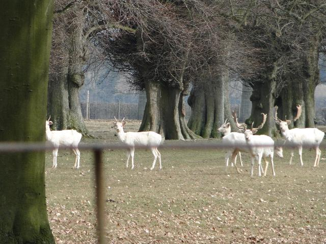 Deer in the Deer Park
