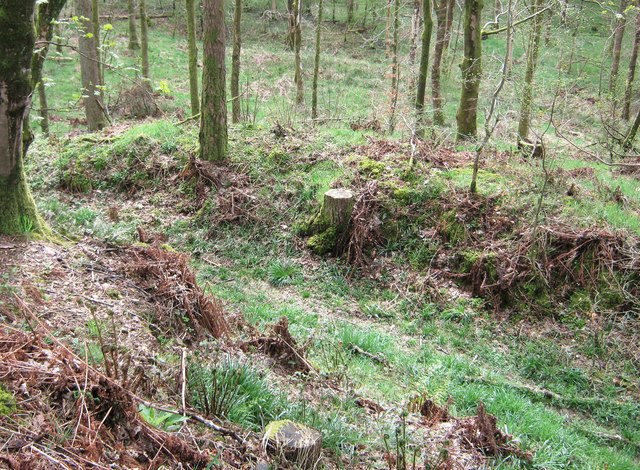 The ditch at Cally Motte, from above