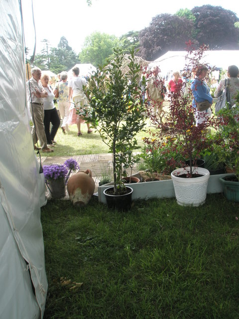 2010 Stansted House Garden Show- plant stall (4)