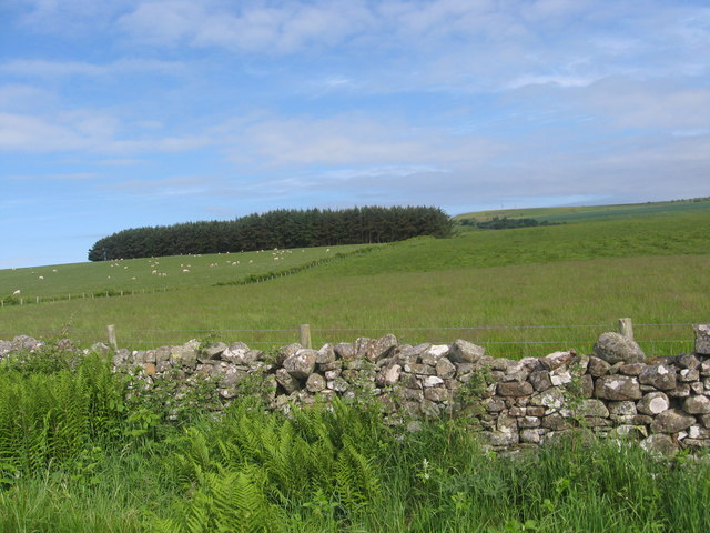 Grazing land near Swinnie Farm