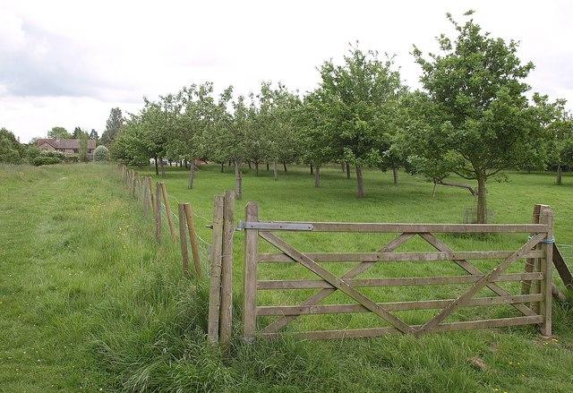 Orchard, Chilthorne Domer