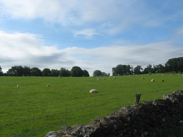 Sheep grazing near Wester Fodderlee