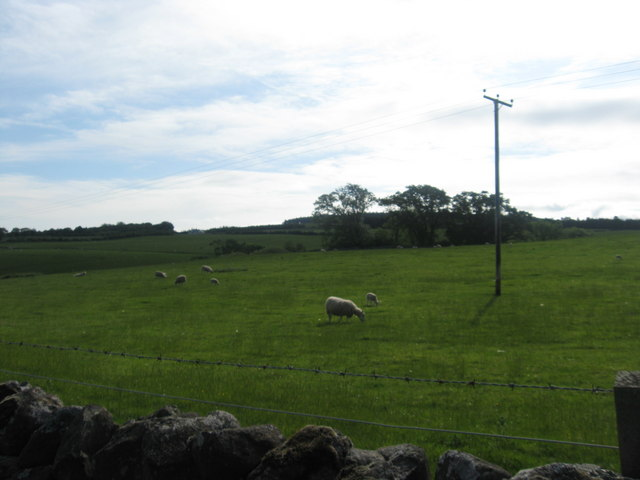 Sheep at Fodderlee