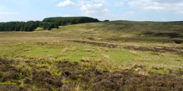 Moorland near Knockshanoch