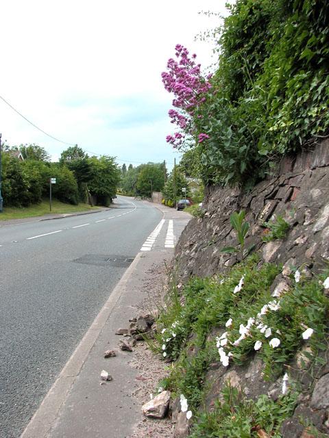 Flowers beside the A134 road through Whittington