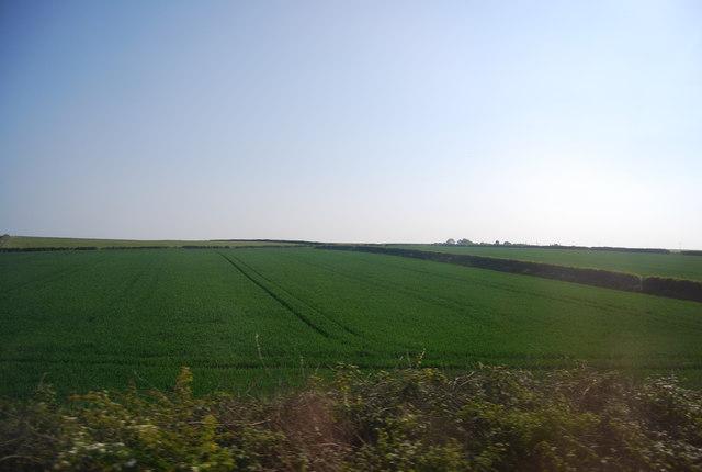 Wheat fields near Buckton