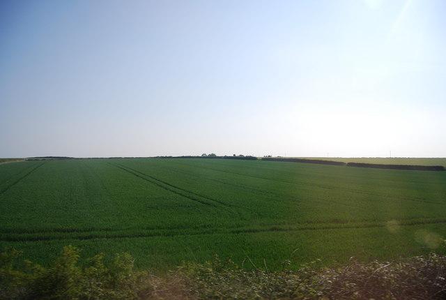 Large wheat field near Buckton