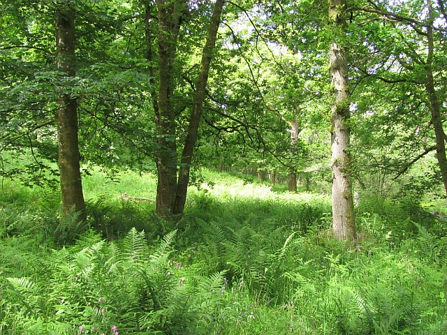 Catter Wood