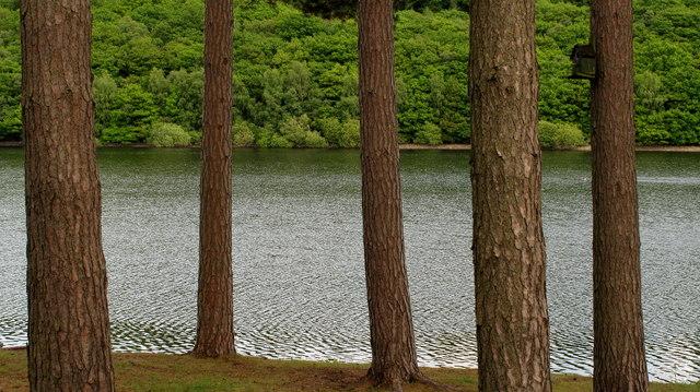 Tunstall Reservoir