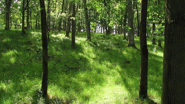 Gargowan Wood