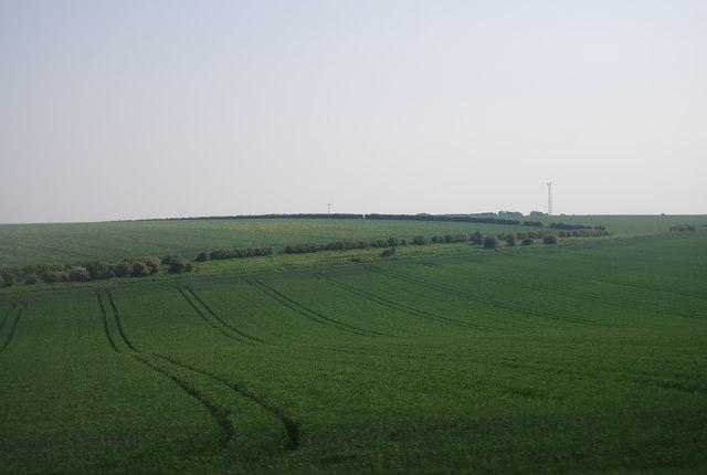 Wheat and Oil Seed Rape fields