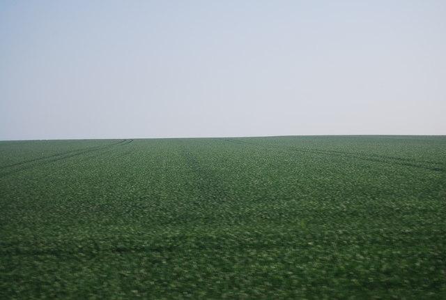 Wheat as far as the eye can see, Speeton Field