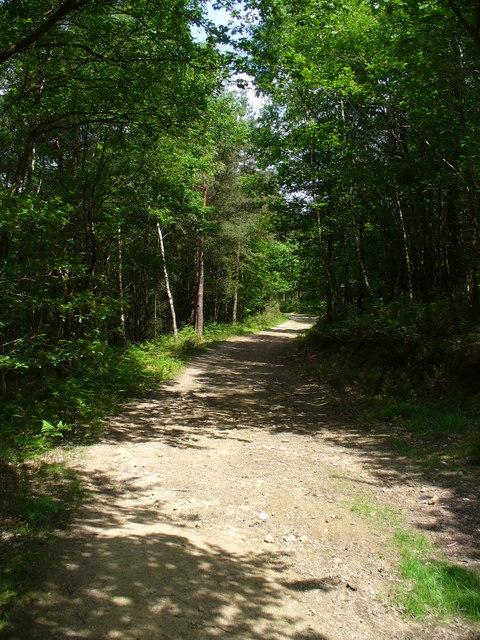 Hurt Wood Bridleway
