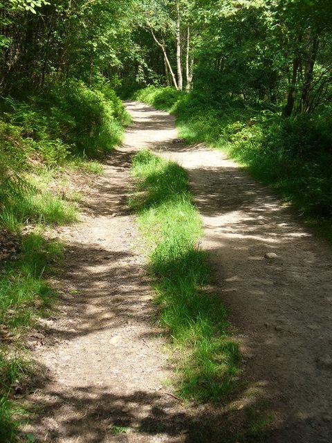 Leafy Bridleway, Hurt Wood