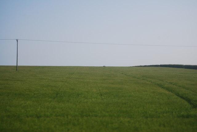 Wheat field, Speeton Field