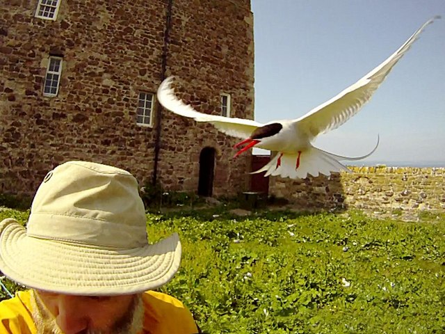 The Photographer Having Funny Tern Inner Farne