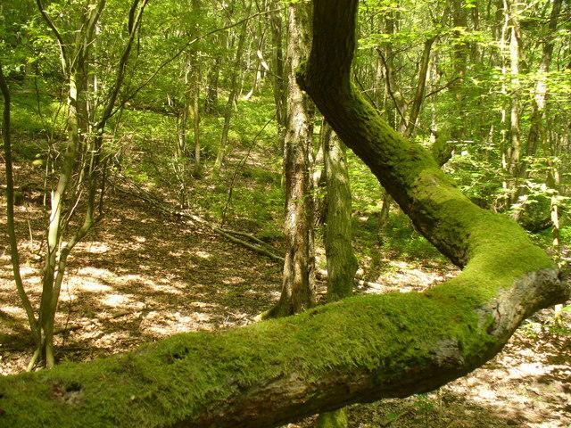 Leafy Hurt Wood
