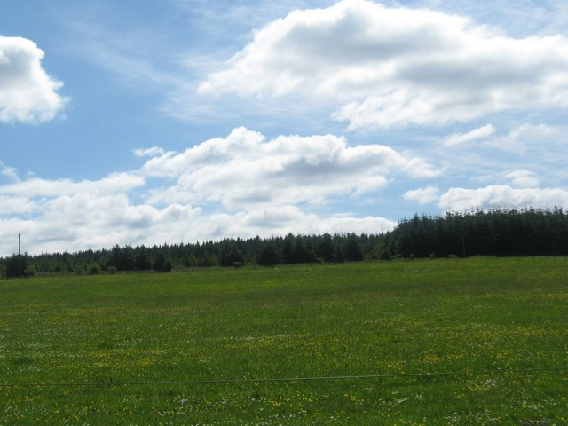 Grasslands and forest near Florida