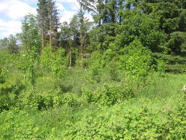 New plantation near Florida