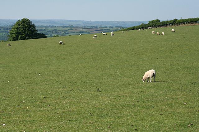 Stoodleigh: by Little Haydon Farm