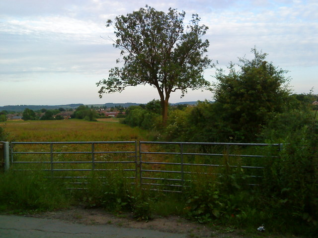 Hedgerow off Common Lane