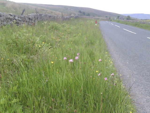 Verge vegetation beside B6259
