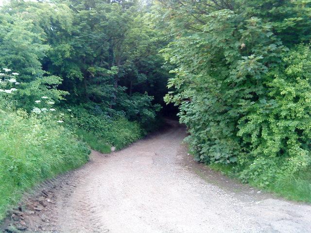 Lane to Stapleford