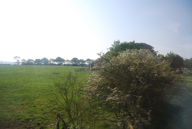 Pasture and hedge in blossom by the railway