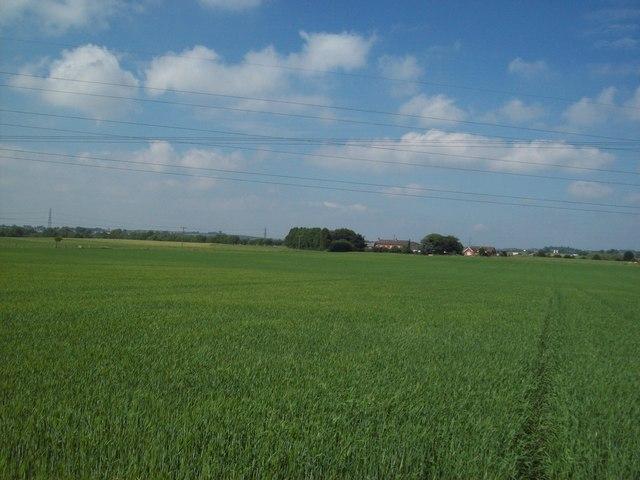 Crop Field near Breach Farm