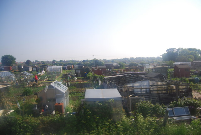 Allotments by the railway