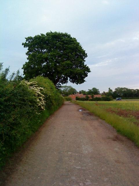 Large tree near Southfields Farm