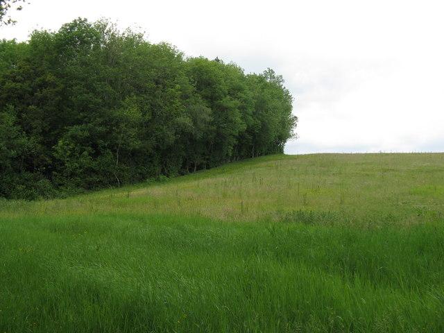 Field boundary with Prestwick Copse