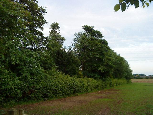 Hedgerow and Trees near Southfields Farm