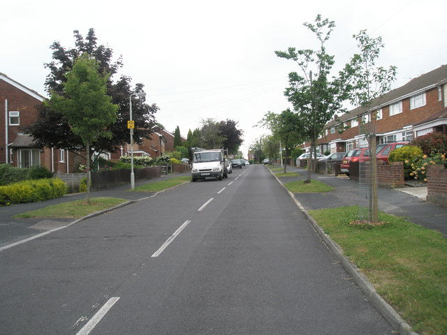Trees in Corbett Road